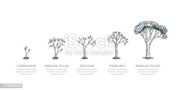 Five stages of growing tree, vector sketch illustration. Investment and finance growth business concept. Infographic design template.