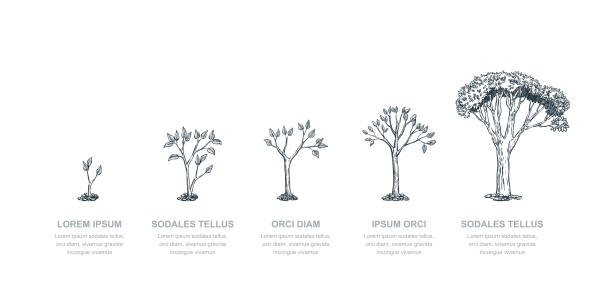 stages of growing tree, vector sketch illustration. investment and finance growth business concept. infographic template - рост stock illustrations