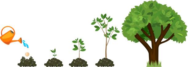 Stages of growth of a tree from a seed. Life cycle of a tree: from seed to large tree. Watering the plants Stages of growth of a tree from a seed. Life cycle of a tree: from seed to large tree. Watering the plants sapling stock illustrations