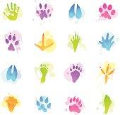 Illustration containing different animal tracks.