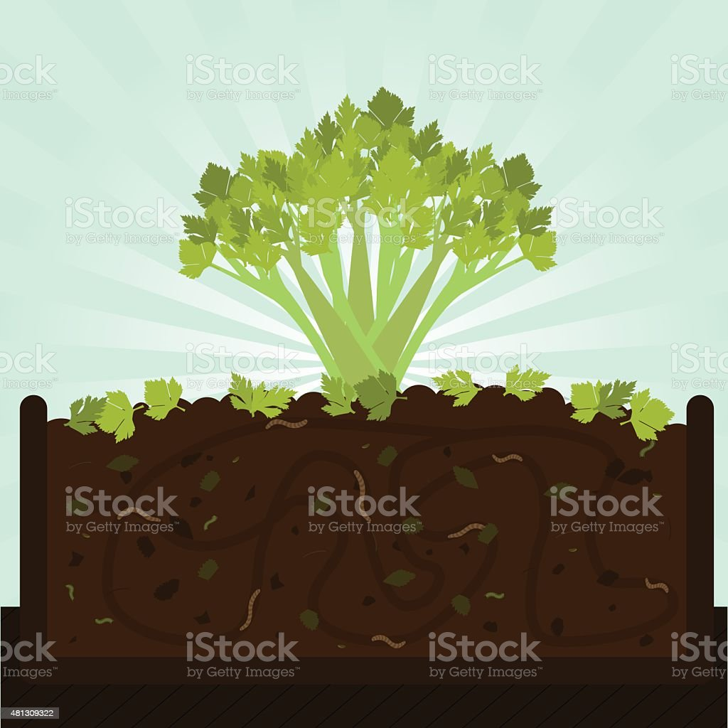 stalk of celery and compost stock vector art istoc
