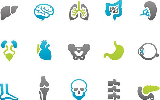 Stampico icons - Anatomy