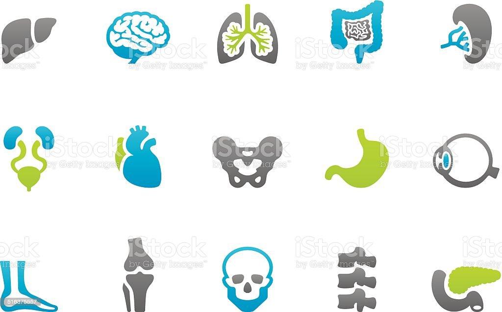 Stampico icons - Anatomy vector art illustration