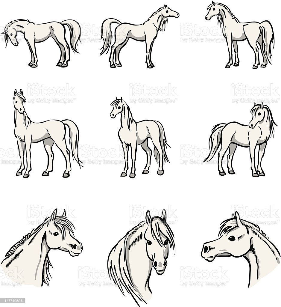 Standing Arabian Horses vector art illustration