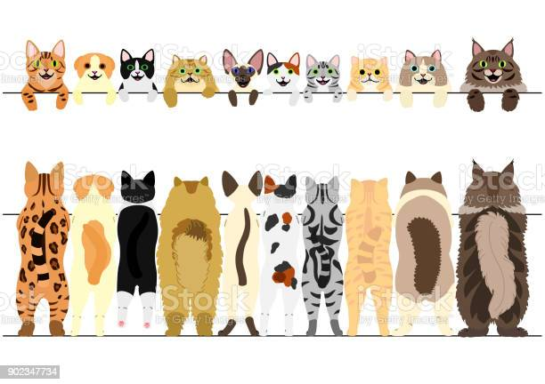 Standing cats front and back border set vector id902347734?b=1&k=6&m=902347734&s=612x612&h=y0syiexrmszxi2pnwcyqtpa1yfa5aapmcqnqnninvvy=