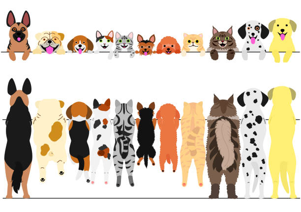 standing dogs and cats front and back border set - cat stock illustrations, clip art, cartoons, & icons