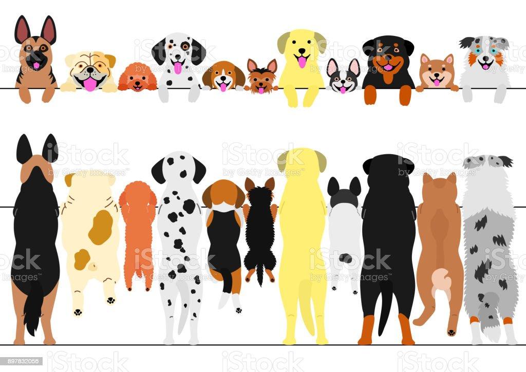 standing dogs front and back border set vector art illustration