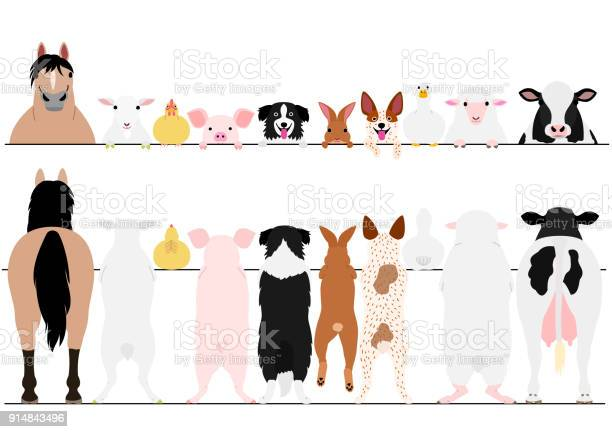 Standing farm animals front and back border set vector id914843496?b=1&k=6&m=914843496&s=612x612&h=belt0dbqrc 3882nfuuf 3xt 9fqqx cea23ktlq7wg=