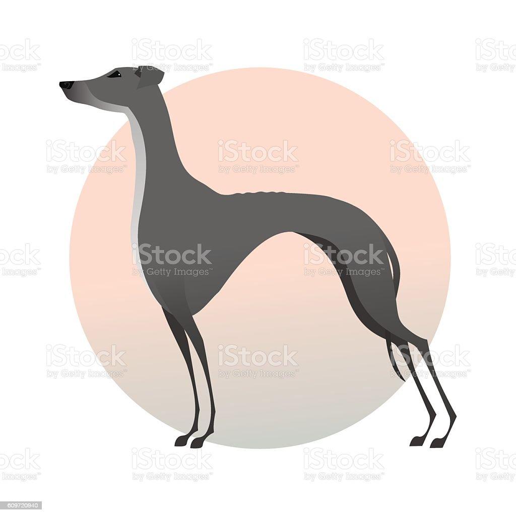 Standing greyhound isolated on background. Stylized image dog. vector art illustration
