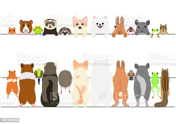 Standing pet animals front and back border set vector id907405966?b=1&k=6&m=907405966&s=612x612&h=4zzrwb6 5nmohowl9i g4b2zuvxjmkpn3laogbdunx8=