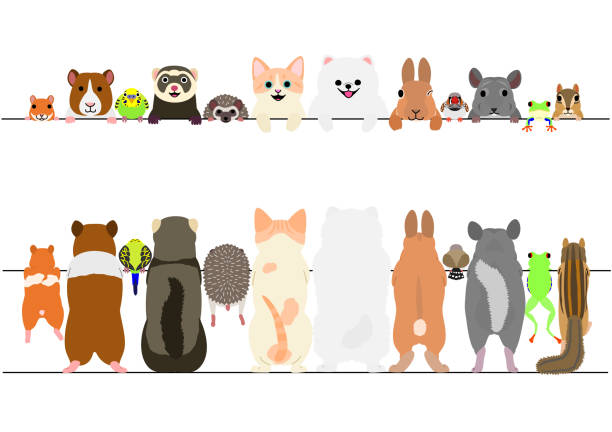 standing pet animals front and back border set - pets stock illustrations, clip art, cartoons, & icons