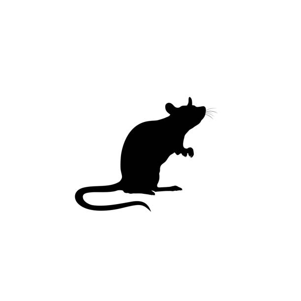Standing Rat silhouette. Rat icon. vector sign Standing Rat silhouette. Rat icon. vector sign rodent stock illustrations