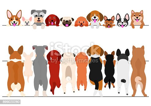 standing small dogs front and back border set