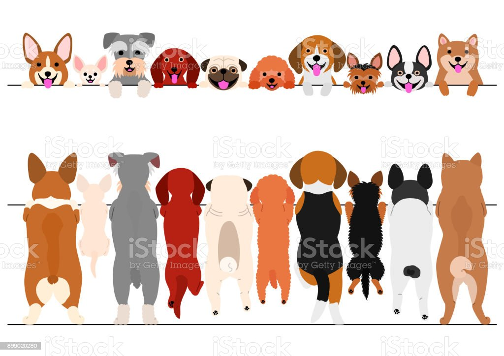 standing small dogs front and back border set vector art illustration