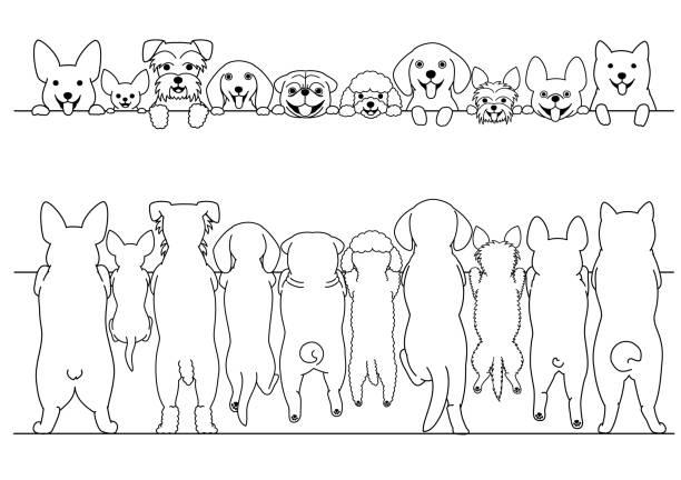 stehende kleine hunde vorder- und hinteren linie kunst grenze festgelegt - schoßhunde stock-grafiken, -clipart, -cartoons und -symbole