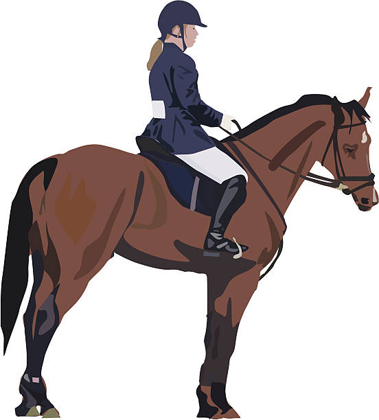 Standing to Attention (Vector drawing, horse, riding, rider) vector art illustration