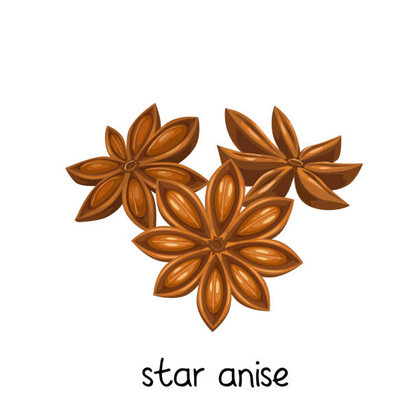 star anise spice vector art illustration