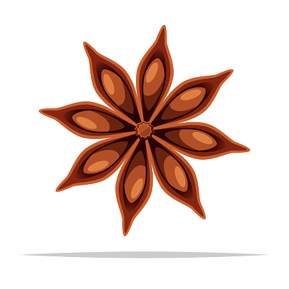 Star anise spice vector isolated illustration