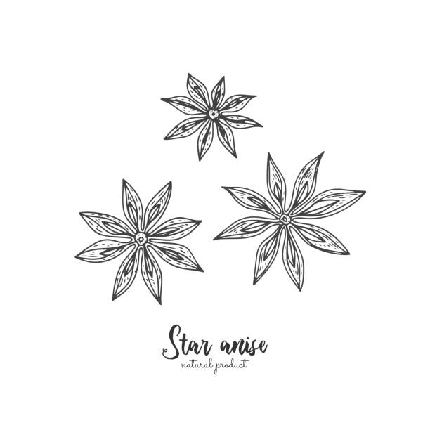 Star anise vector illustration isolated on white background. Vector vintage spices illustration. Detailed natural spices drawing. Great for menu, recipes, decoration kitchen items. vector art illustration