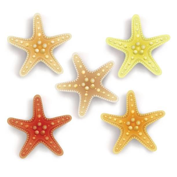 illustrazioni stock, clip art, cartoni animati e icone di tendenza di starfish isolated on white background - immerse in the stars