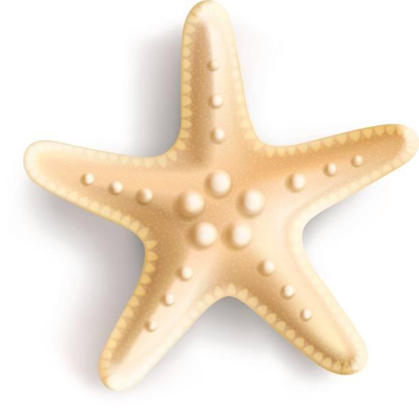 illustrazioni stock, clip art, cartoni animati e icone di tendenza di starfish isolated on white background. - immerse in the stars