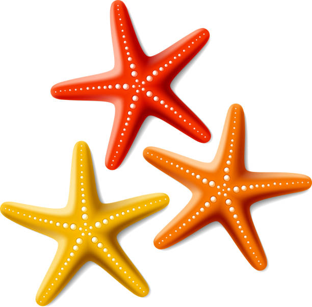Image result for starfish clip art
