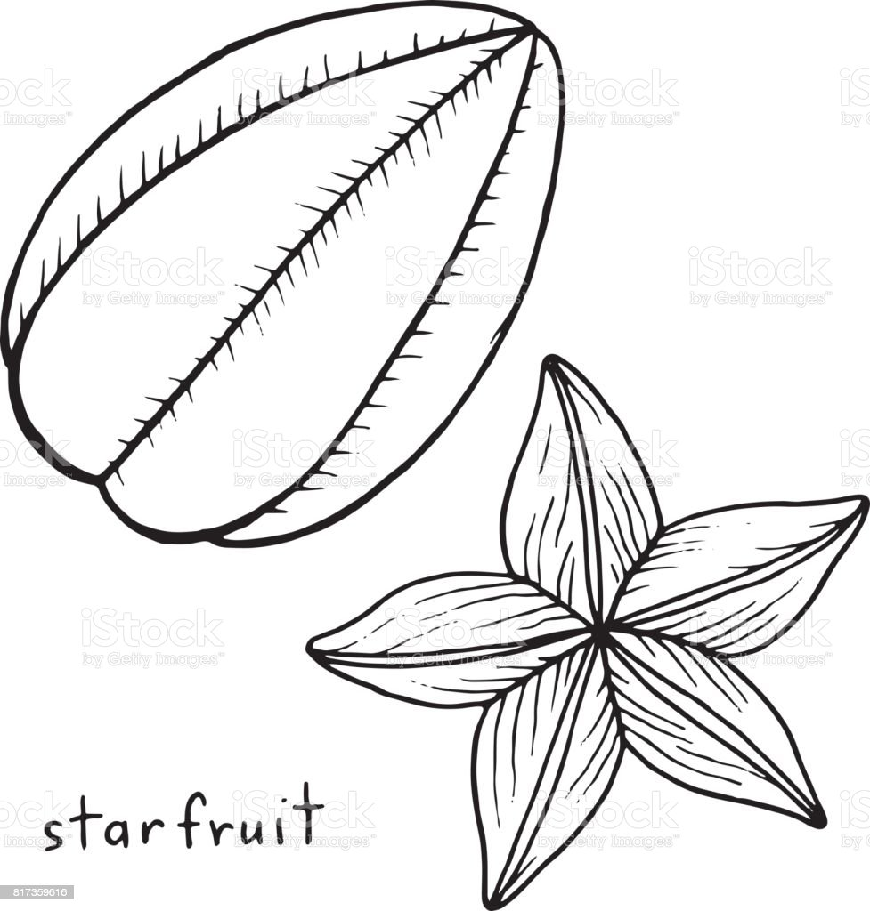 Starfruit coloring page. Graphic vector black and white art for coloring books for adults. Tropical and exotic fruit line illustration. vector art illustration