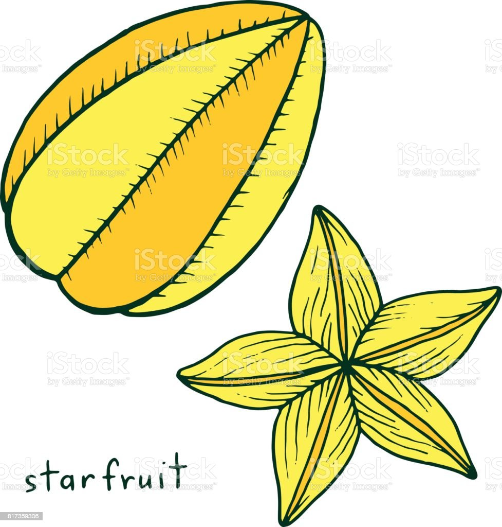 Starfruit coloring page. Graphic vector colorful doodle art for coloring books for adults. Tropical and exotic fruit line illustration. vector art illustration
