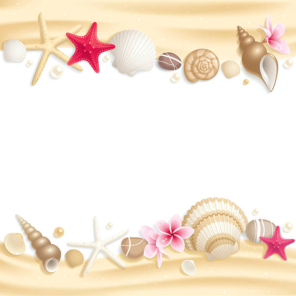 stationary with seashells on top and bottom of page - seashell stock illustrations, clip art, cartoons, & icons