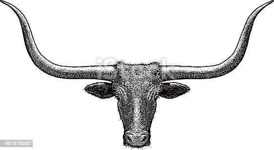 Steer Head, Line Art. Texas Longhorn. Isolated on white