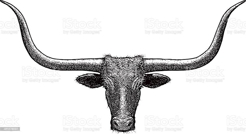Steer Head, Texas Longhorn. Isolated on white vector art illustration