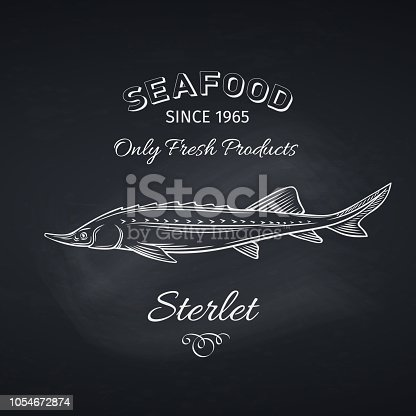 Hand drawn sterlet fish on chalkboard. Seafood icon menu restaurant design. Engraving style. Vector illustration.