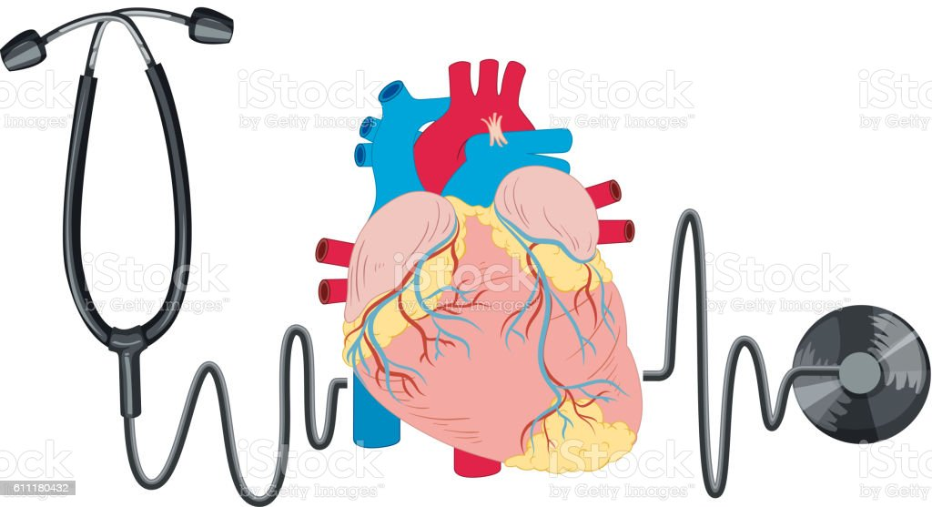 Stethoscope And Human Heart Stock Vector Art & More Images of ...