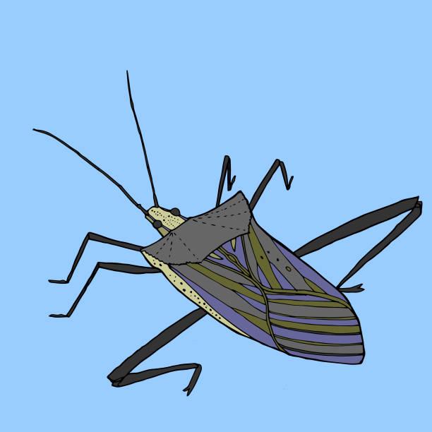 Stick Bug vector art illustration