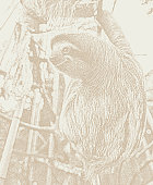 Stipple illustration of a Happy, rescued Sloth