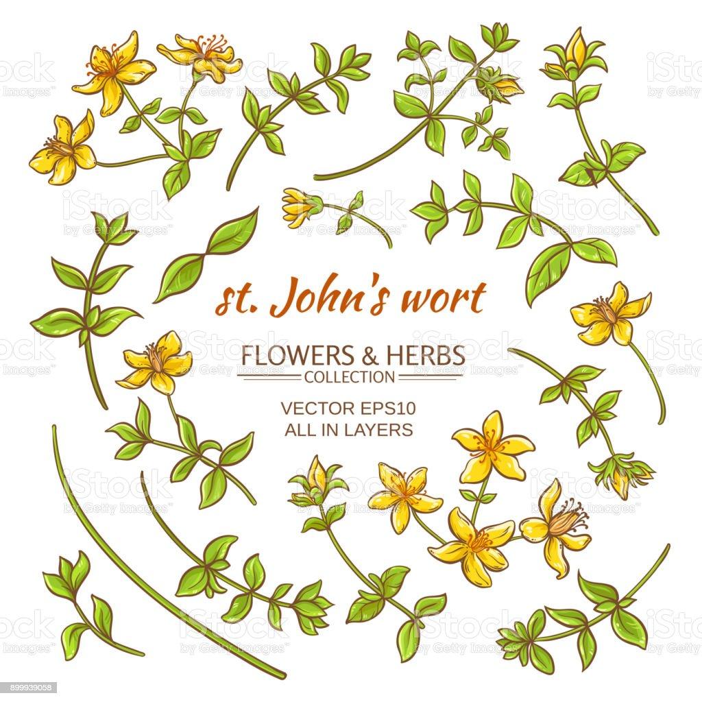 St.John's wort elements vector set