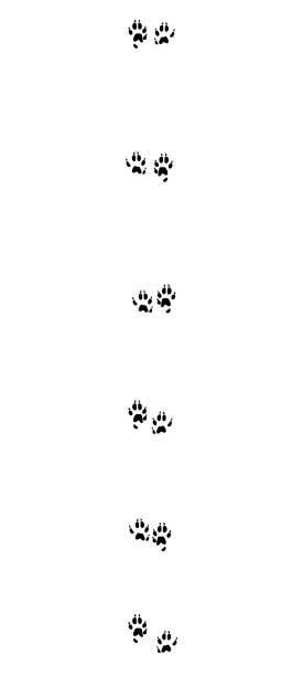 Stoat tracks. Typical footprints of short-tailed weasel - isolated black icon vector illustration on white background. Stoat tracks. Typical footprints of short-tailed weasel - isolated black icon vector illustration on white background. ermine stock illustrations