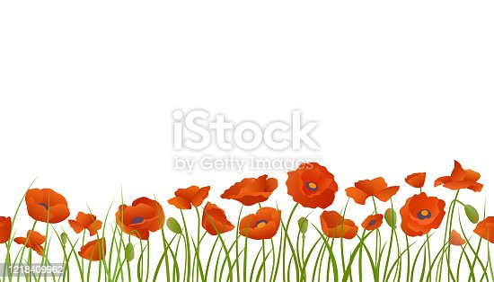 Background seamless extendable to endless pattern of red poppy flowers in grass. Vector Isolated illustration.