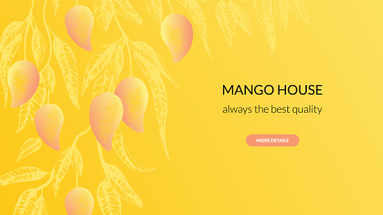 Stock vector illustration with mango fruit banner