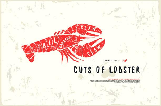 ilustrações de stock, clip art, desenhos animados e ícones de stock vector lobster cuts diagram in the style of handmade graphics - meat texture