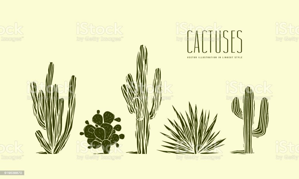 Stock vector set of hand drawn cactus vector art illustration
