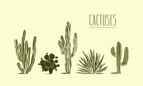 stock vector set of hand drawn cactus - desert stock illustrations