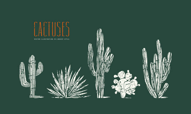 Stock vector set of hand drawn cactus Stock vector set of hand drawn cactus. Illustration in linocut style. Different forms of plants with rough texture. Print on green background linocut stock illustrations