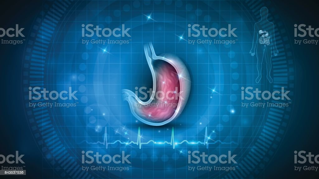 Stomach health care vector art illustration