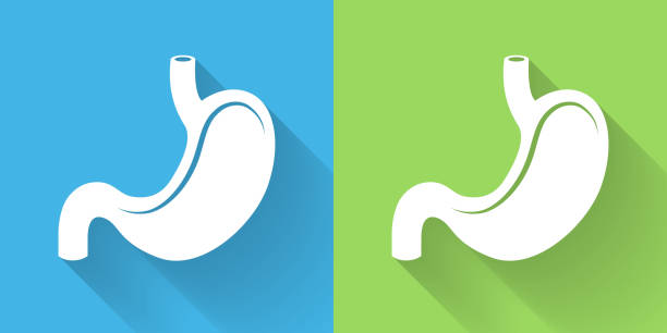 Stomach Icon with Long Shadow vector art illustration