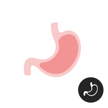 Stomach simple vector flat illustration