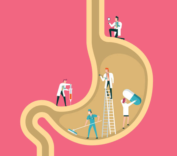 Stomach Team of doctors diagnose human stomach digestive system stock illustrations