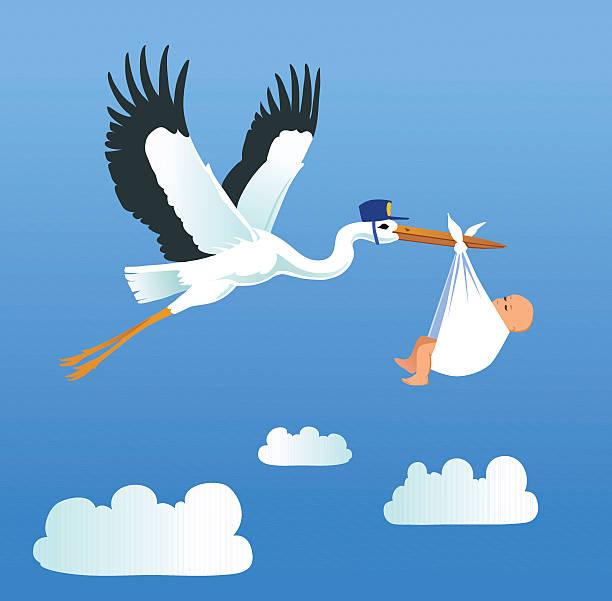 ilustrações, clipart, desenhos animados e ícones de cegonha voando e tem capacidade para pouco de bebê - novo bebê