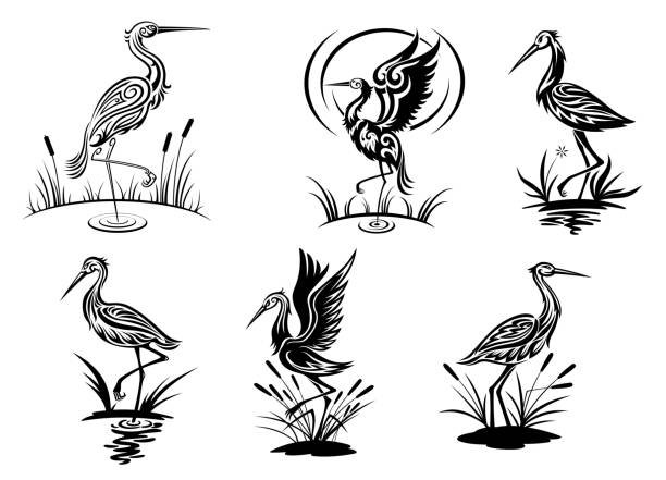 Stork, heron, crane and egret birds Stork, heron, crane and egret birds vector illustrations in black and white side view showing the birds wading in water heron stock illustrations