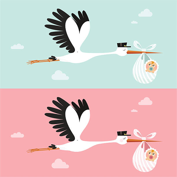 Stork Stork delivering a newborn. Please see some similar pictures in my lightboxs: it's a girl stock illustrations
